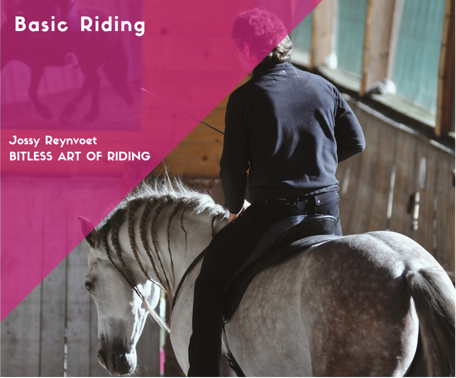 Part 2: Basic riding <br><strong>Price € 94,95</strong>